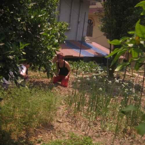 Organic Farming Volunteer
